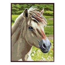 EX5078 Набор для раскрашивания по номерам 'Белый конь', 30x40 см
