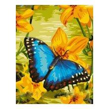 EX5080 Набор для раскрашивания по номерам 'Синяя бабочка', 30x40 см
